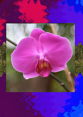Daycare Mixed Media - Orchid Pink Flower Bud Photographed At Costa Rica Sensual Smile Graphic Dital Painted Background Ide by Navin Joshi