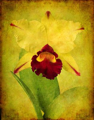 Robert Jensen Photograph - Orchid by Robert Jensen
