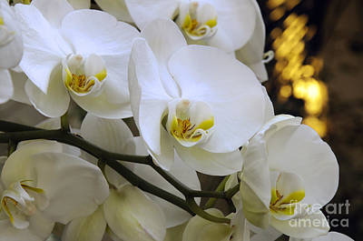 Andee Design White Photograph - Orchid Romance by Andee Design
