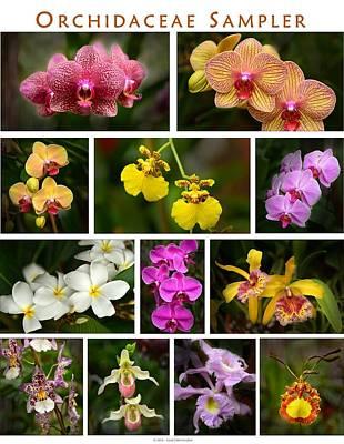 Orchid Sampler Art Print by Dana Sohr