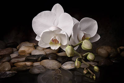 Reflecting Water Photograph - Orchid - Sensuous Virtue by Tom Mc Nemar