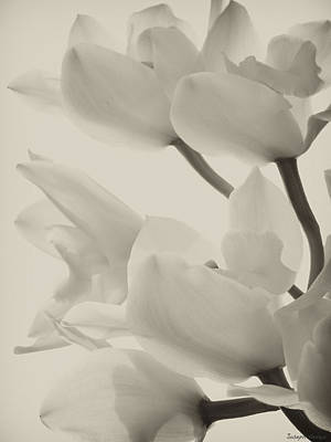 Food And Flowers Still Life - Orchid Sepia by Joseph Hedaya