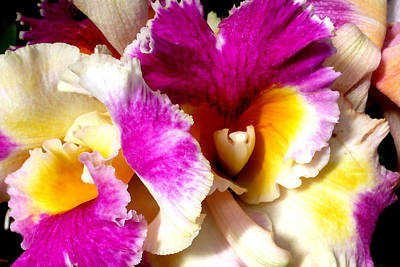 Floral Photograph - Orchid Series 6 by Katy Hawk
