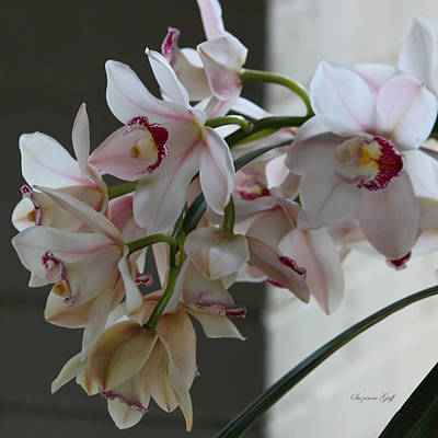 Orchid Series Iv Art Print by Suzanne Gaff