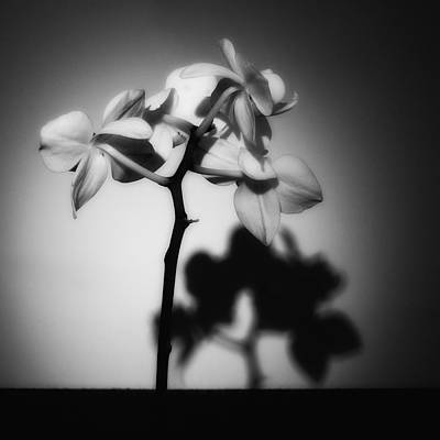 Photograph - Orchid Shadow Play by Ron White
