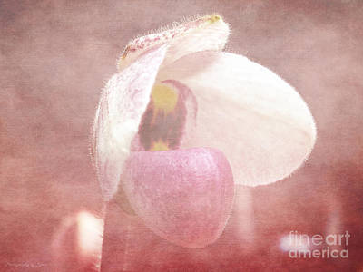 Orchid Softly Art Print