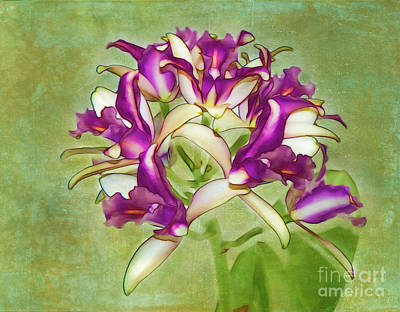 Photograph - Orchid Spray by Judi Bagwell