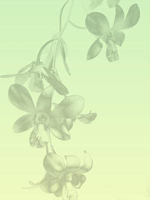 Photograph - Orchid Sprig I by Arkamitra Roy