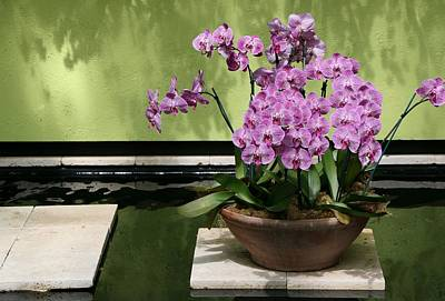 Photograph - Orchid Still Life by Allen Beatty