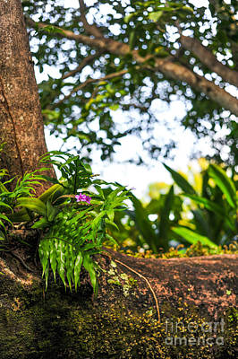 Orchid Tree Moss And Beauty Art Print