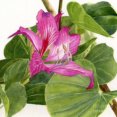 Orchid Art Painting - Orchid Tree Square Design by Sharon Freeman
