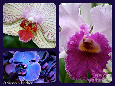 Photograph - Orchid Trifecta by Susan Herber
