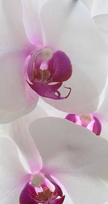 Nature Photograph - Orchid Trio by Kathy Spall