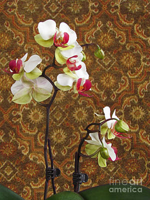 Photograph - Orchid With Tapestry by Deborah Johnson