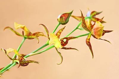 Photograph - Orchid Yellow by Jane Girardot
