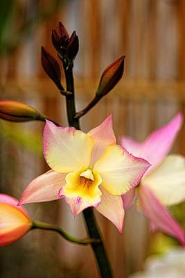 Photograph - Orchid Zen by Brian Davis