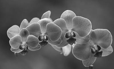 Photograph - Orchidaceae Black And White by Dan Sproul