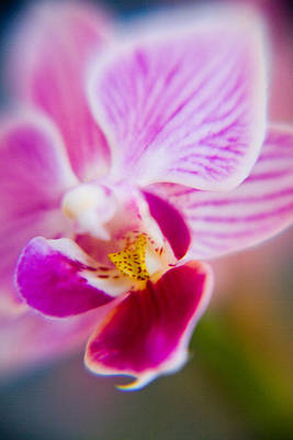 Photograph - Orchide Detail 2 by Kim Lagerhem