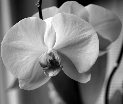 Art Print featuring the photograph Orchidee by Silke Brubaker