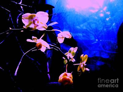 Photograph - Orchidia by Vanessa Palomino