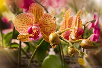 Photograph - Orchids 1 by Natalie Rotman Cote