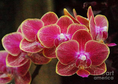 Photograph - Orchids 15 by Rudi Prott