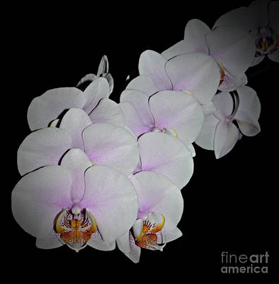 Photograph - Orchids 3 by Chalet Roome-Rigdon