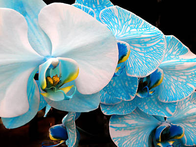 Photograph - Orchids 3 by Julie Palencia