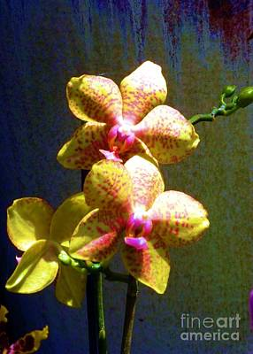 Photograph - Orchids Against Ceramic by Barbie Corbett-Newmin