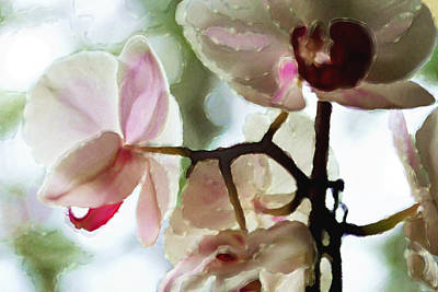 Photograph - Orchids And Light - Flowers by Marie Jamieson