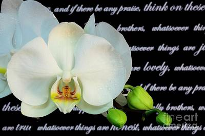 Orchids And Scripture Art Print by Pattie Calfy