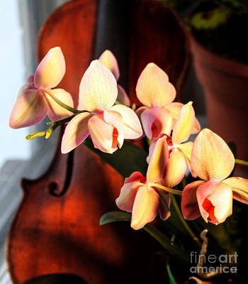 Violin Digital Art - Orchids And Violin by Steven  Digman
