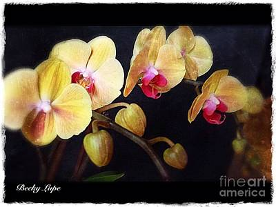 Photograph - Orchids Arise by Becky Lupe