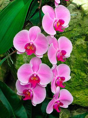 Photograph - Orchids by Bernard Lynch