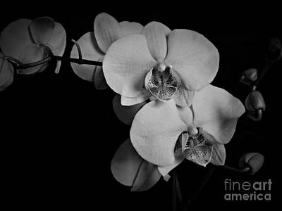 Neurotic Images Photograph - Orchids Bw by Chalet Roome-Rigdon