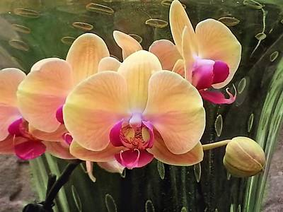 Photograph - Orchids Cream-red by Jane Girardot