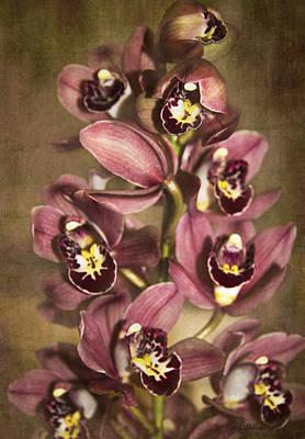 Art Print featuring the photograph Orchids - Cymbidium  by Kerri Ligatich