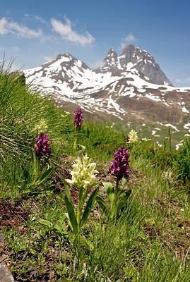 Floral Photograph - Orchids (dactylorhiza Sambucina) by Bob Gibbons