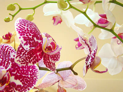 Flower Healing Art Photograph - Orchids Floral Art Prints Orchid Flowers by Baslee Troutman