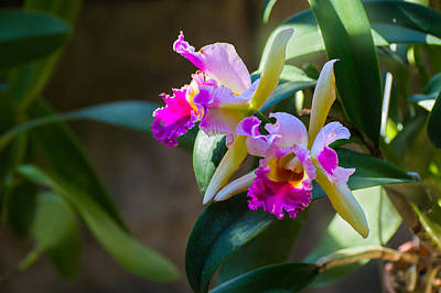 Photograph - Orchids by Gene Norris