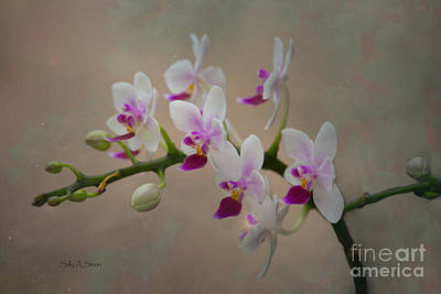 Photograph - Orchids In Pink And White by Sally Simon