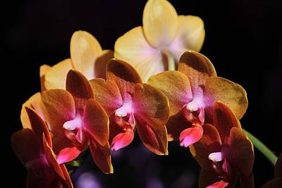 Photograph - Orchids In Sunlight II by Michael Saunders