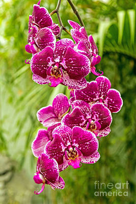Christmas Christopher And Amanda Elwell Rights Managed Images - Orchids Royalty-Free Image by Kate Brown