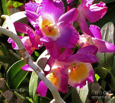 Photograph - Orchids by Kathie Chicoine
