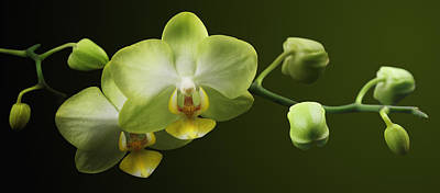 Photograph - Orchids by Marc Huebner