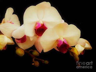 Photograph - Orchids Of Beauty by Scott B Bennett