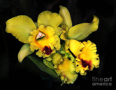 Photograph - Orchids On Black by Judi Bagwell
