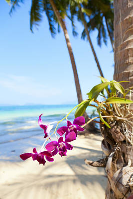 Orchids On The Beach Art Print by Alexey Stiop