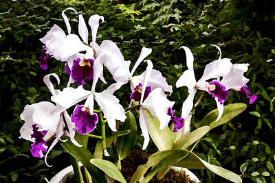 Digital Art - Orchids by Photographic Art by Russel Ray Photos