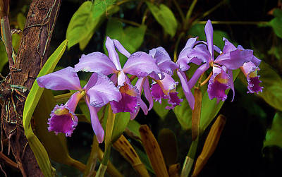 Photograph - Orchids Too by Herb Paynter